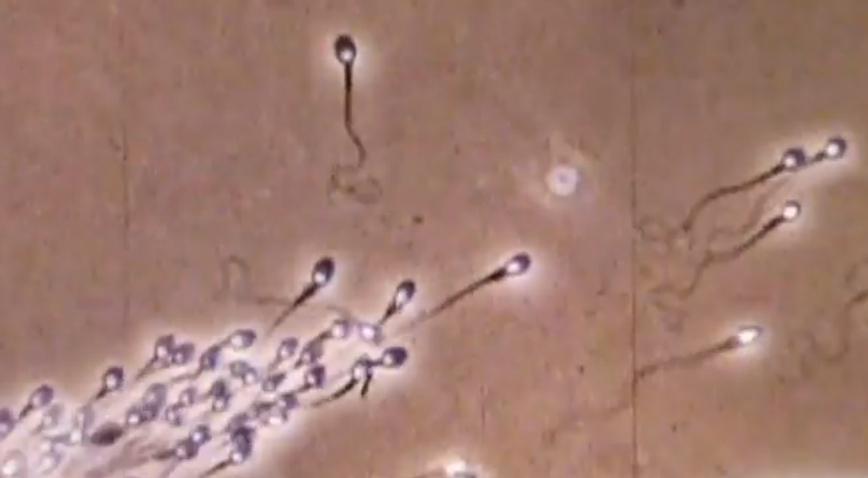Tube big semen flow vagina girls pussy webcam